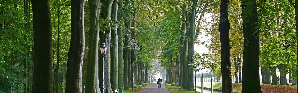 Courir avec son coach sportif dans les parcs de Versailles